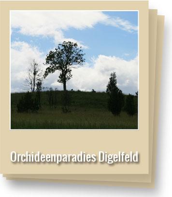 orchideenparadies-digelfeld